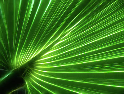 Photograph - Glowing Palm by Louise Lindsay