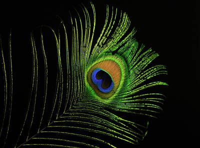 Photograph - Glowing Peacock Eye by Douglas Barnett