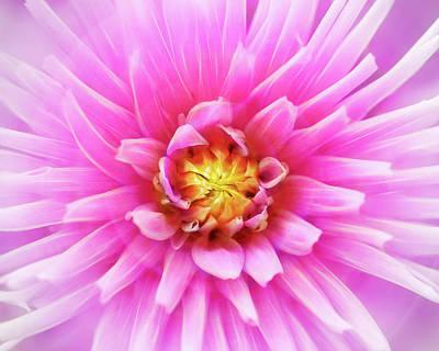 Photograph - Glowing Pink Dahlia Bloom by Robert FERD Frank