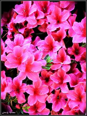 Painting - Glowing Pink Flowers by Jon Volden