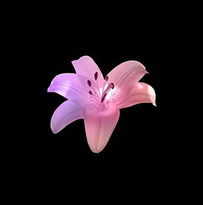 Photograph - Glowing Pink Lily On Black by Johanna Hurmerinta