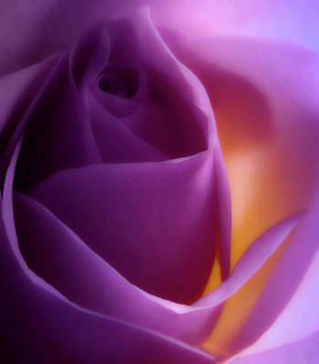 Photograph - Glowing Pink Rose 2 by Johanna Hurmerinta
