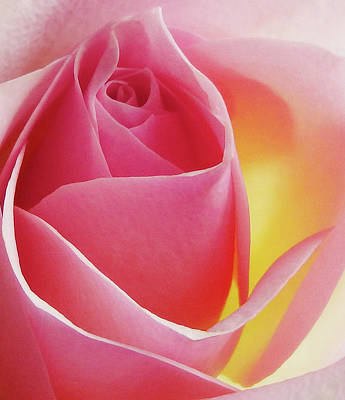 Glowing Pink Rose Art Print