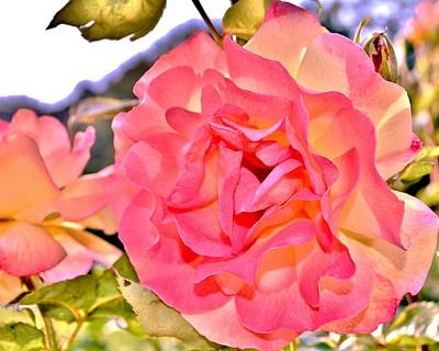 Photograph - Glowing Pink Rose Petals by Kim Bemis