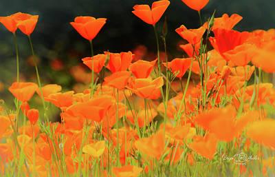 Glowing Poppies Art Print