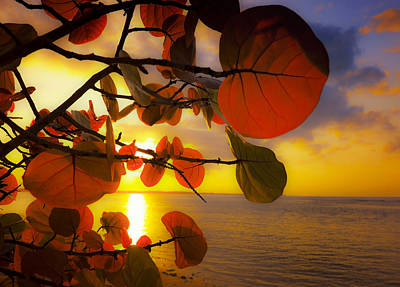 Beach Royalty-Free and Rights-Managed Images - Glowing Red II by Stephen Anderson