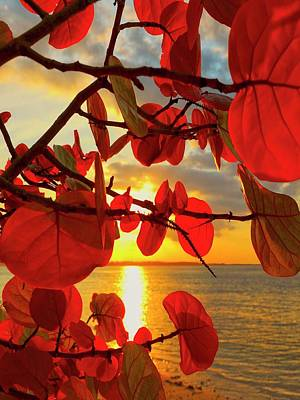 Tropical Leaves Photograph - Glowing Red by Stephen Anderson