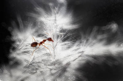 Ant Wall Art - Photograph - Glowing by Rooswandy Juniawan
