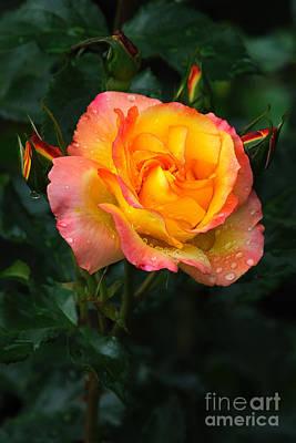 Glowing Rose Art Print by Edward Sobuta