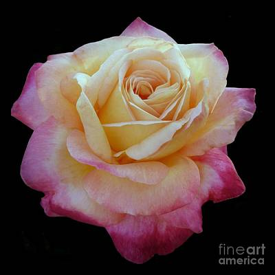 Photograph - Glowing Rose On Black by Patricia Strand