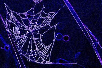 Photograph - Glowing Spider Web by Buddy Scott