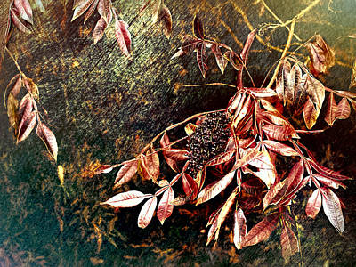 Glowing Sumac With Berries Art Print by Bellesouth Studio