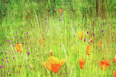 Photograph - Glowing Summer by Terrie Taylor