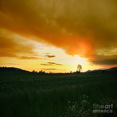 Glowing Tree Print by Angel  Tarantella