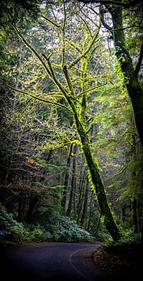 Photograph - Glowing Tree by Jason Brooks