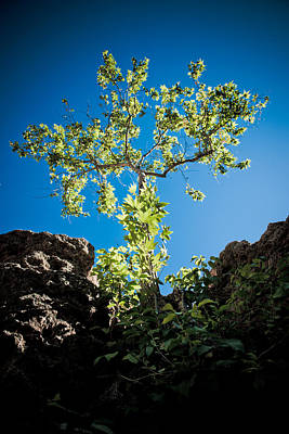 Photograph - Glowing Tree by Scott Sawyer