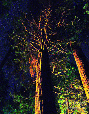 Photograph - Glowing Trees by Peter Piatt
