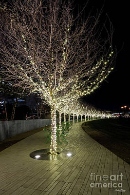 Photograph - Glowing Trees Walkway by Jennifer White