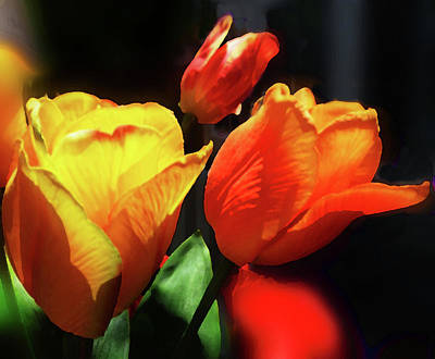 Digital Art - Glowing Tulips Red And Yellow Bouquet  by Irina Sztukowski