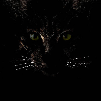 Photograph - Glowing Whiskers by Helga Novelli
