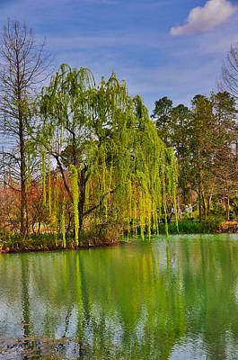 Photograph - Glowing Willow by Linda Brown