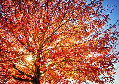 Photograph - Glowing Tree by Carolyn Derstine