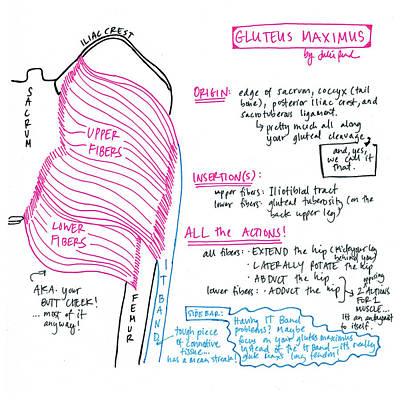 Drawing - Gluteus Maximus by Julie Read