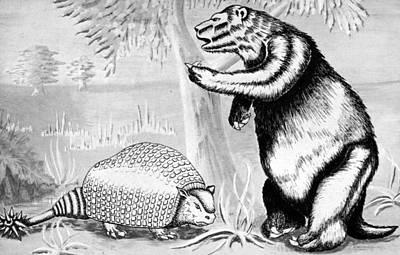 Glyptodont And Sloth Art Print by Granger