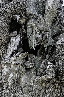 Photograph - Gnarled And Hollowed Old Tree by John Haldane