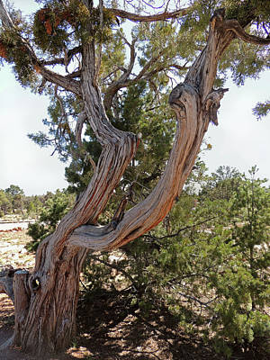 Art Print featuring the photograph Gnarled Beauty by Gordon Beck