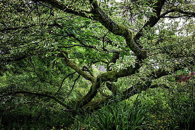 Photograph - Gnarled by Christopher Rees