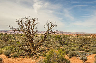 Photograph - Gnarled Juniper Tree In Arches by Sue Smith