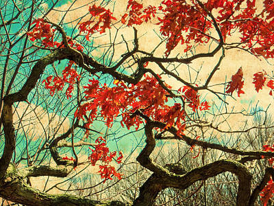 Photograph - Gnarled Old Oak Tree by Shawna Rowe