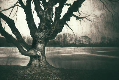 Trees And Lake Photograph - Gnarled Old Tree by Scott Norris