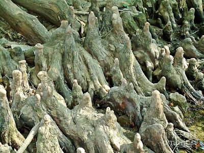 Gnarled Roots Original by Karen Wallace