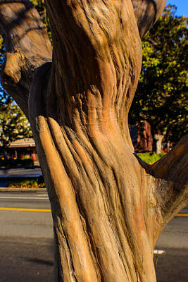 Photograph - Gnarled Strength by Tikvah's Hope