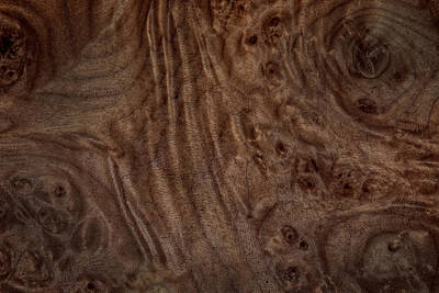 Photograph - Gnarled Swirled Grain Patern In Bigleaf Maple Due To Burls by Phil Cardamone