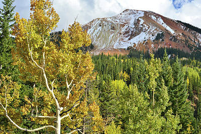 Photograph - Gnarly Aspen At Red Mountain by Ray Mathis