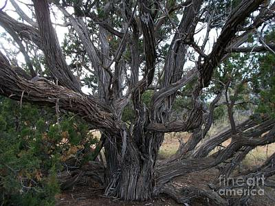 Pinion Photograph - Gnarly Old Tree by Jerry Bokowski
