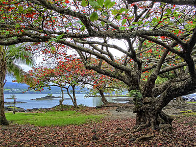 Gnarly Photograph - Gnarly Trees Of South Hilo Bay - Hawaii by Daniel Hagerman