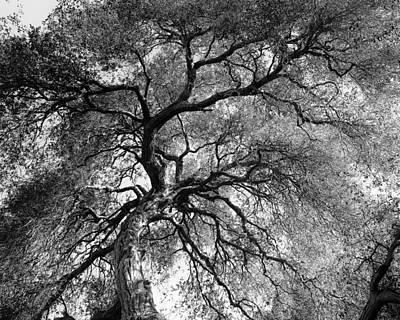 Wildlife Area Photograph - Gnarlyhead by Joseph Smith