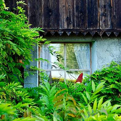Photograph - Gnome In Hiding by Colleen Williams