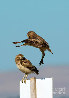 Burrowing Owl Photograph - Go Away by Mike Dawson