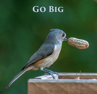 Photograph - Go Big by Jim Moore