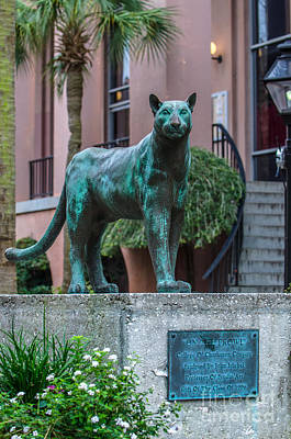 Photograph - Go Cougars by Dale Powell