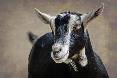 Photograph - Goat 2 by Susan McMenamin