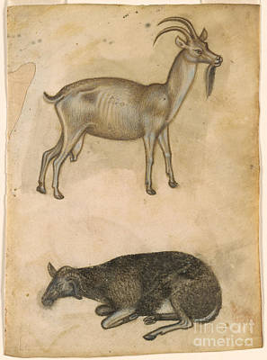 Italian School Painting - Goat And Recumbent Sheep by MotionAge Designs