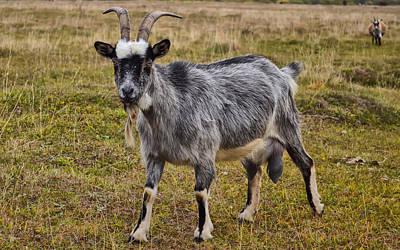 Goat-dereza Art Print