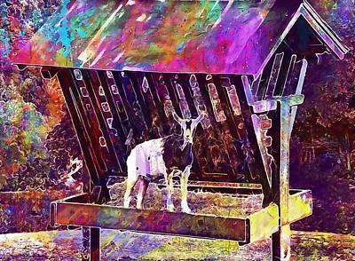 Manger Digital Art - Goat Manger Nature Animal White  by PixBreak Art