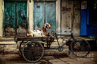 Photograph - Goat On Wheels by Valerie Rosen